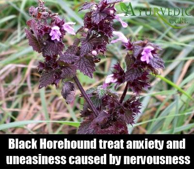 Black Horehound