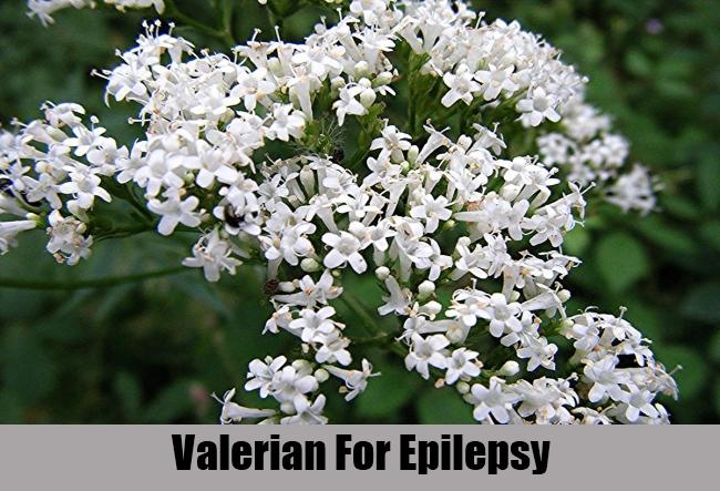 Valerian For Epilepsy