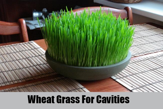 Wheat Grass For Cavities
