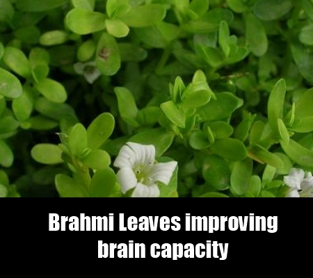 Effective Cure Using Brahmi Leaves