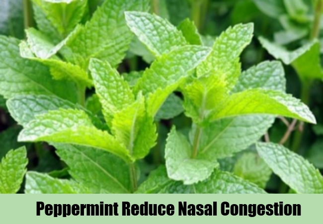 Peppermint Reduce Nasal Congestion