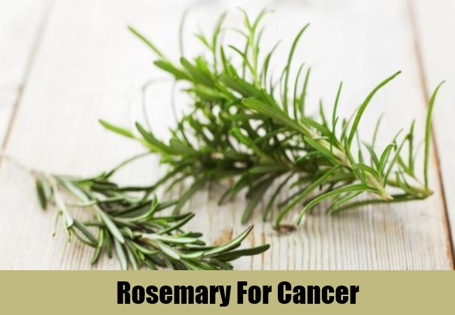 Rosemary For Cancer