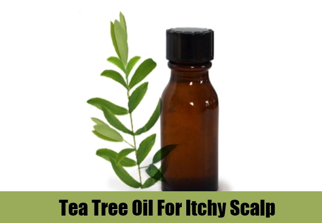 Tea Tree Oil For Itchy Scalp