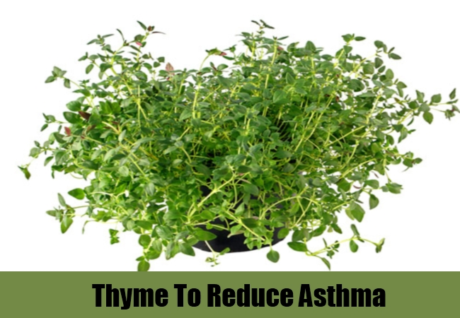 Thyme To Reduce Asthma