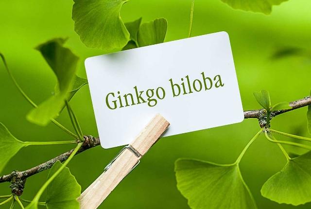 Take In Ginkgo Biloba