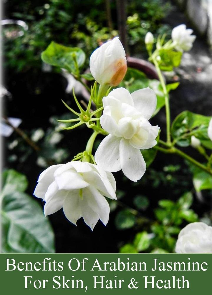 Benefits Of Arabian Jasmine For Skin, Hair And Health